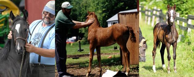 Morgan Horse Farm